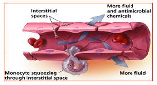 Blood Vessel Receptor